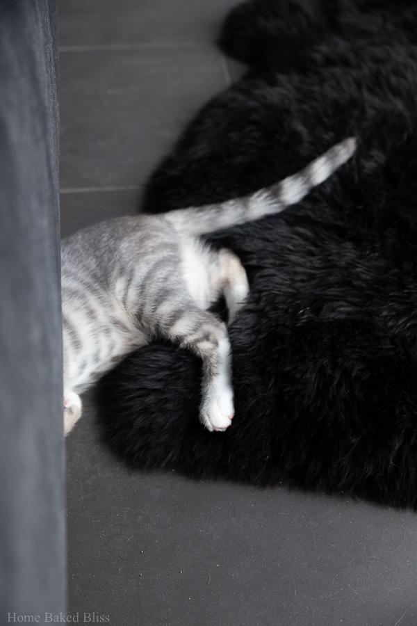 A silver kitten half hidden underneath a velvet bed.